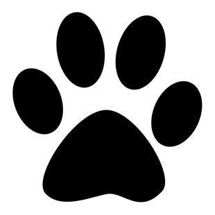 kedibilgisiofficial