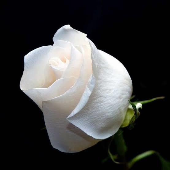 wDKC92 - 🌹🌹Bugünkü çiçekler kime gitsin 🌹🌹